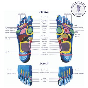 About Reflexology. foot map